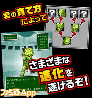2017saibai_jp_02