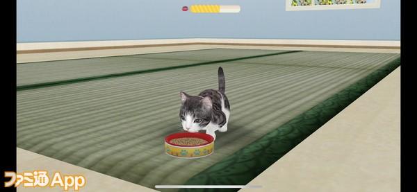 20200429_猫 (8)