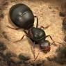 """<span class=""""title"""">【事前登録】アリの生態を超リアルなグラフィックで描く戦略シミュレーション『ザ・アンツ:アンダーグラウンド キングダム』</span>"""